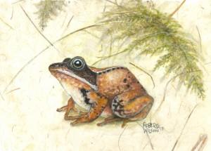 wood-frog-300x215